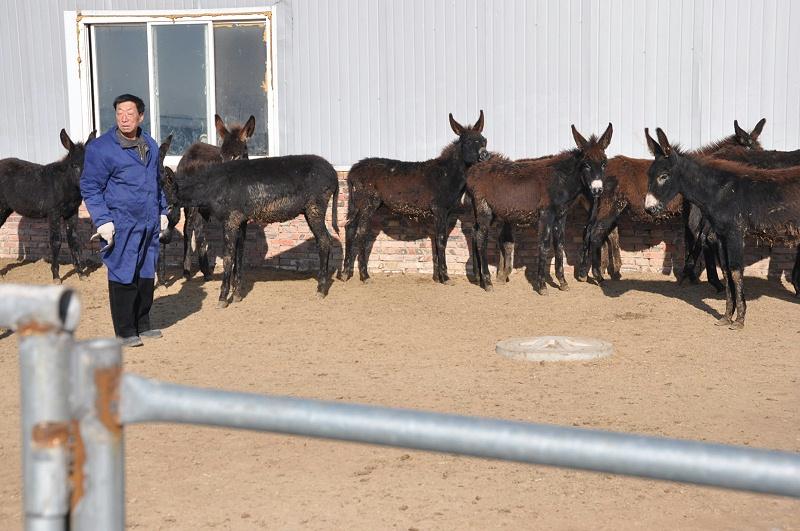 绿色原生态生驴肉批发热卖产地来自河北拴嘴驴