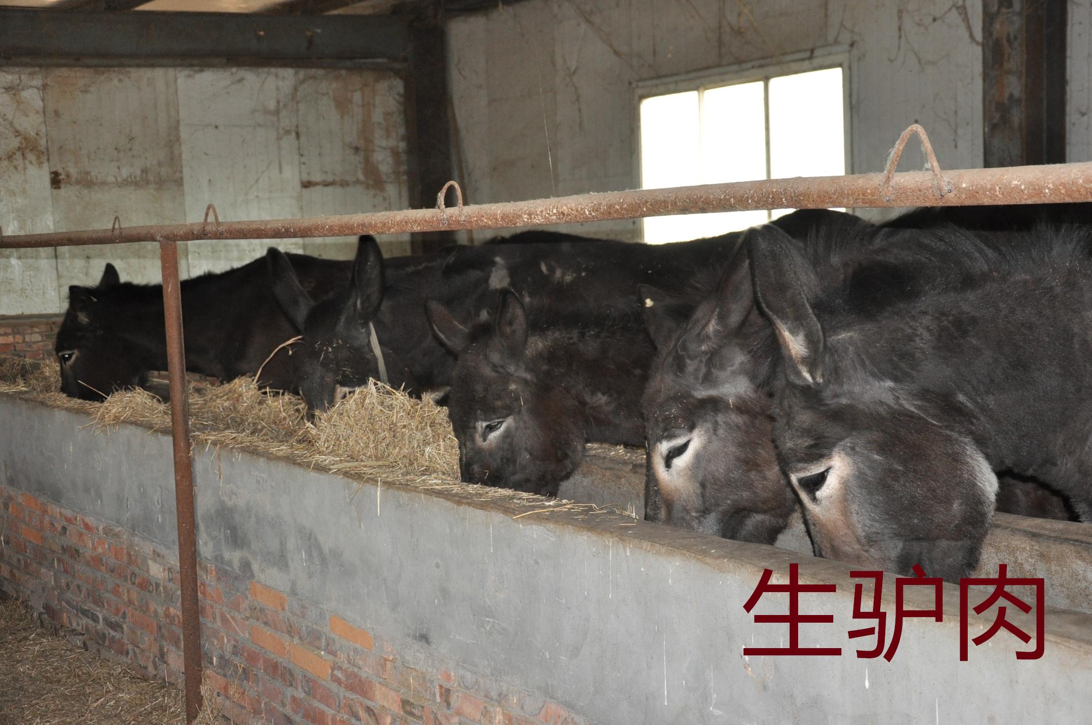 新鲜的生驴肉美味又营养,谁不爱呢?
