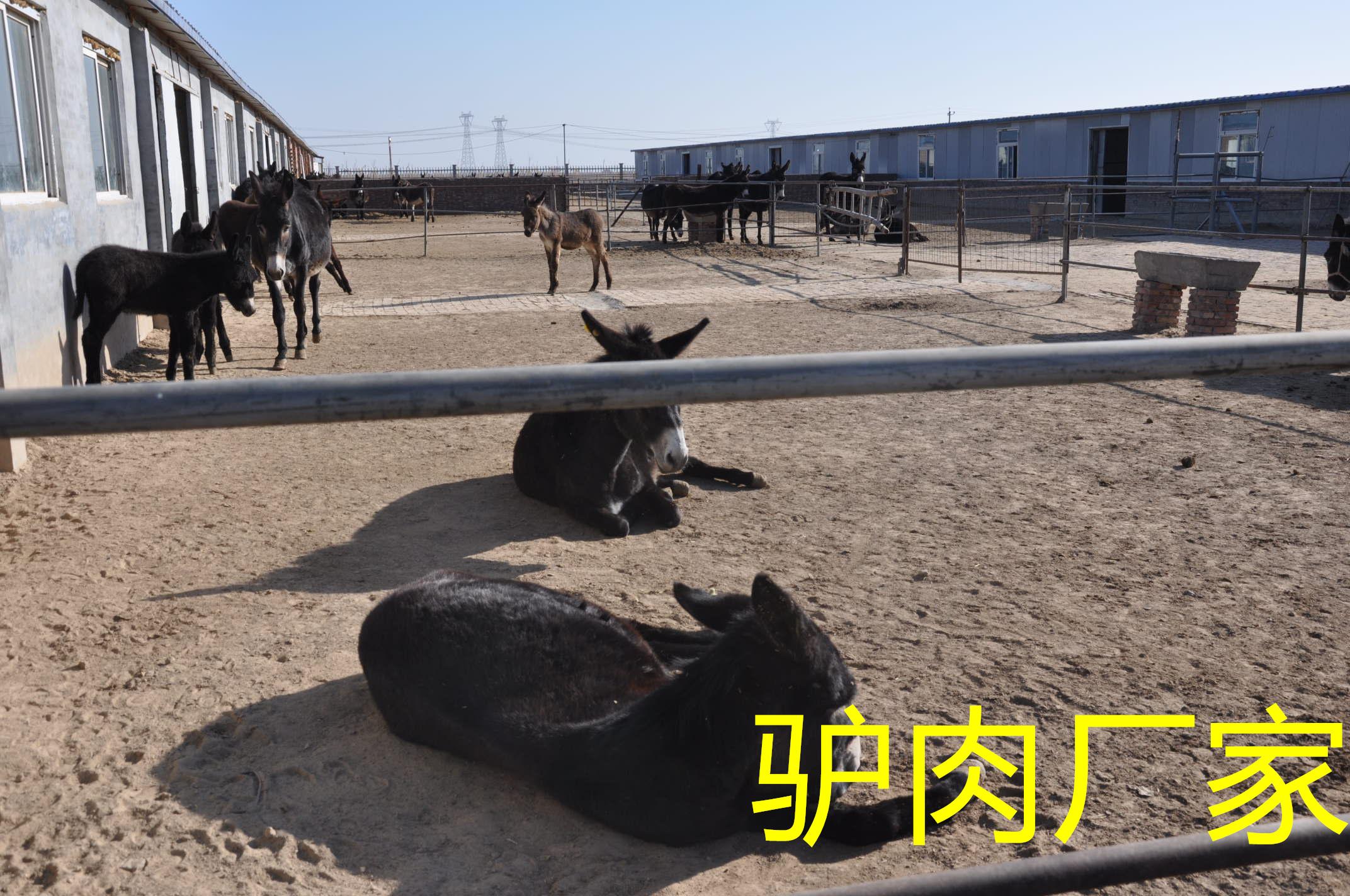 拴嘴驴驴肉厂家用心做优质好驴肉