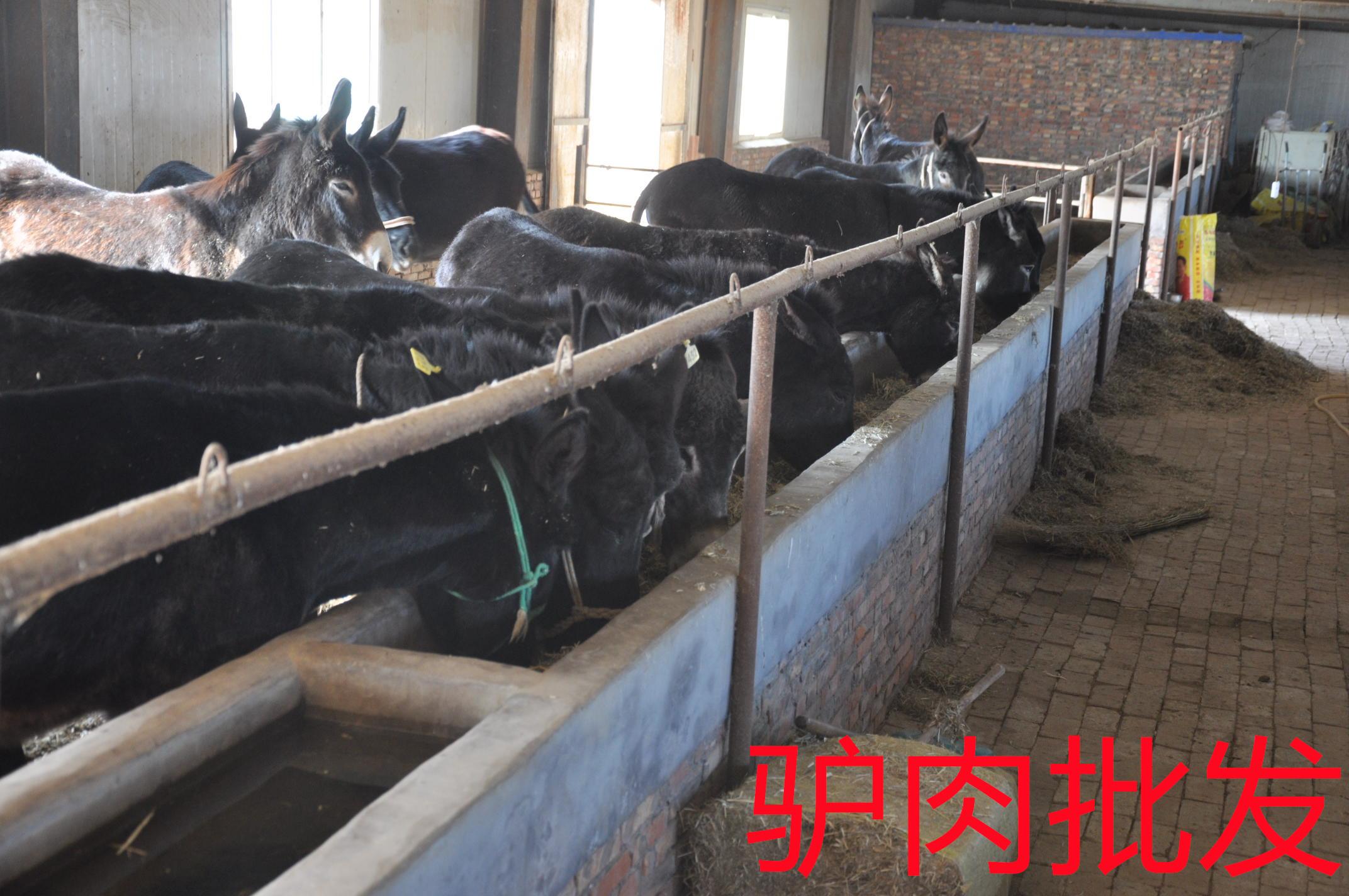 究竟是什么原因让拴嘴驴超越其他驴肉批发厂家?