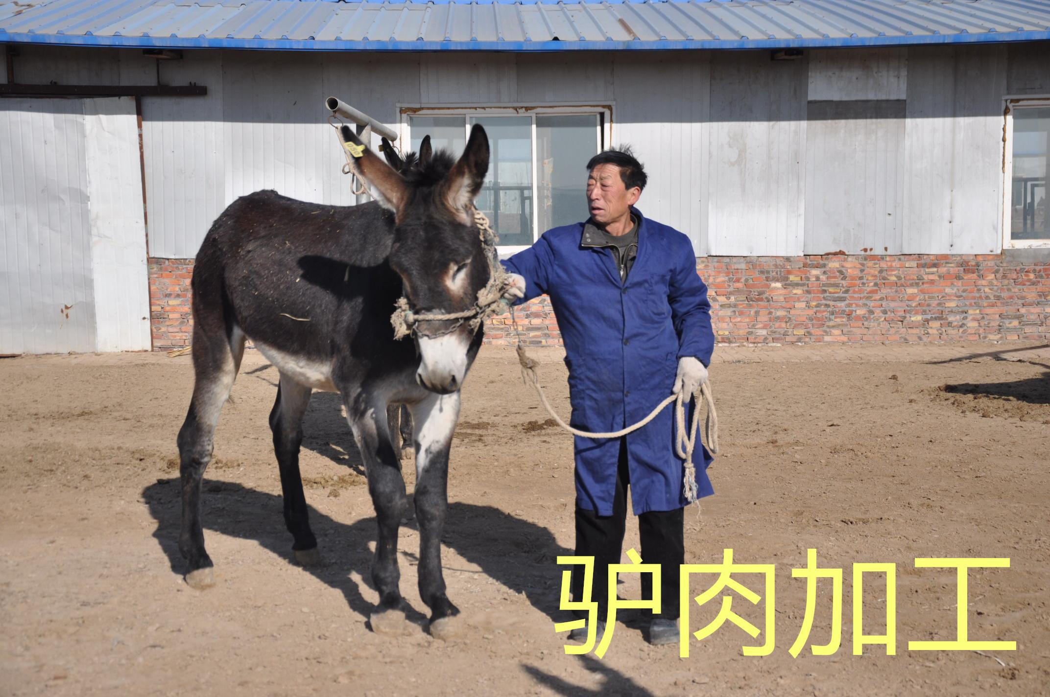 驴肉加工基地的选择,拴嘴驴驴肉厂家