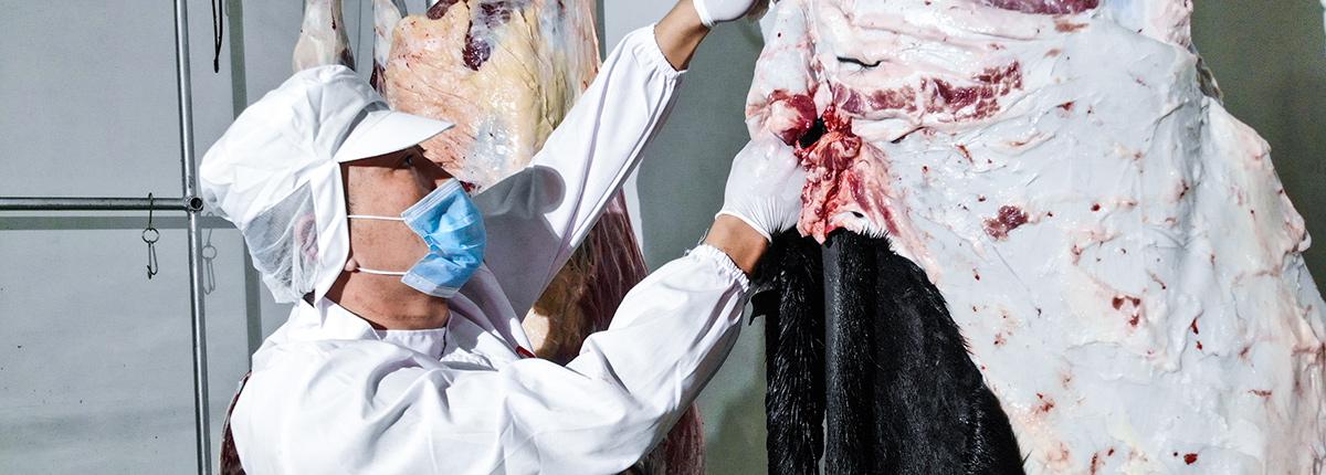 我们为河北驴肉厂家提供您安全的食品保障