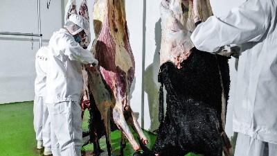 河北驴肉批发市场采用拴嘴驴的安全肉源