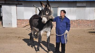 河北驴肉厂家采购经销价格实惠的原因在哪里呢?