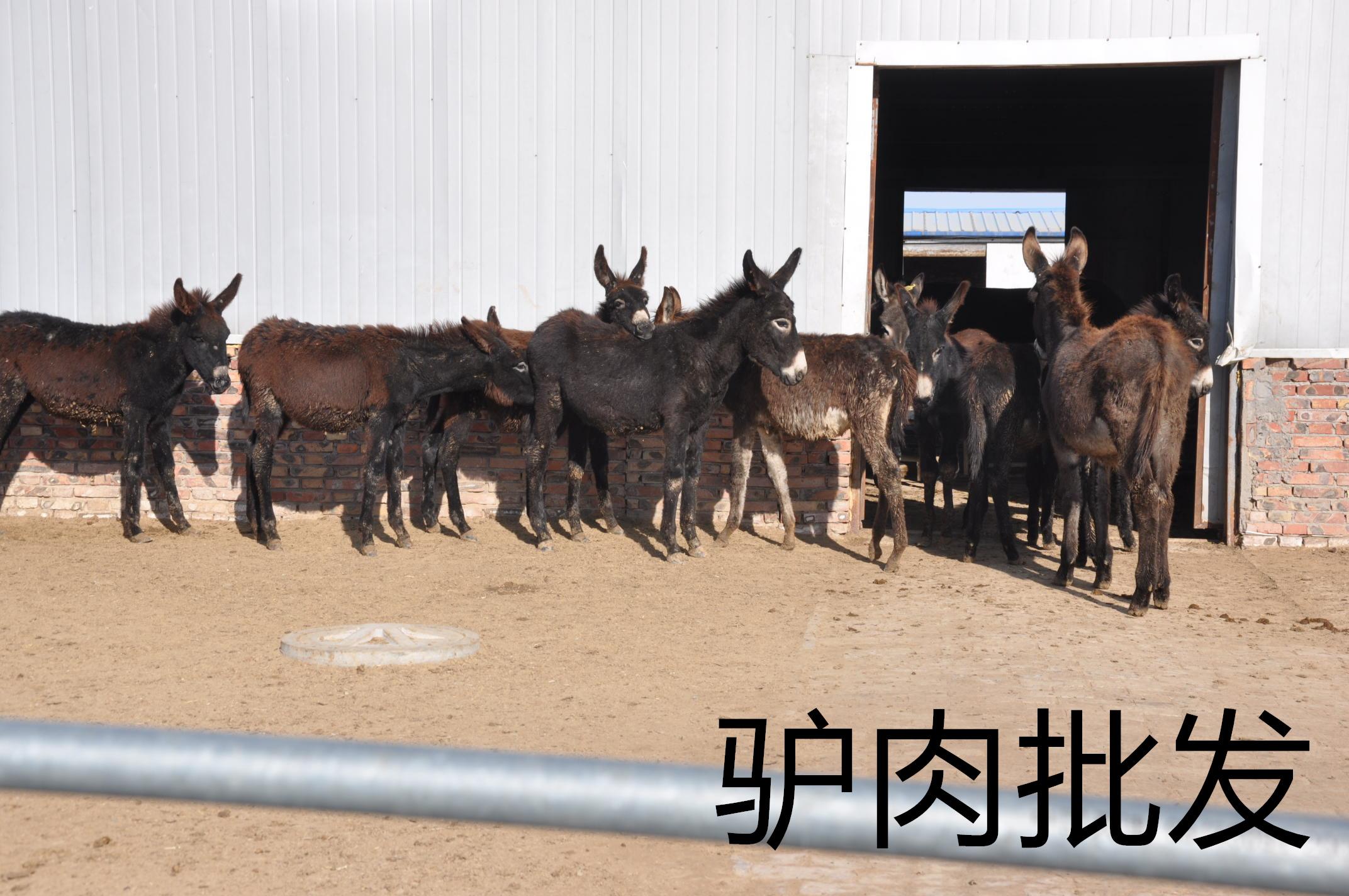 鼎晟龙—首选的驴肉批发生产基地